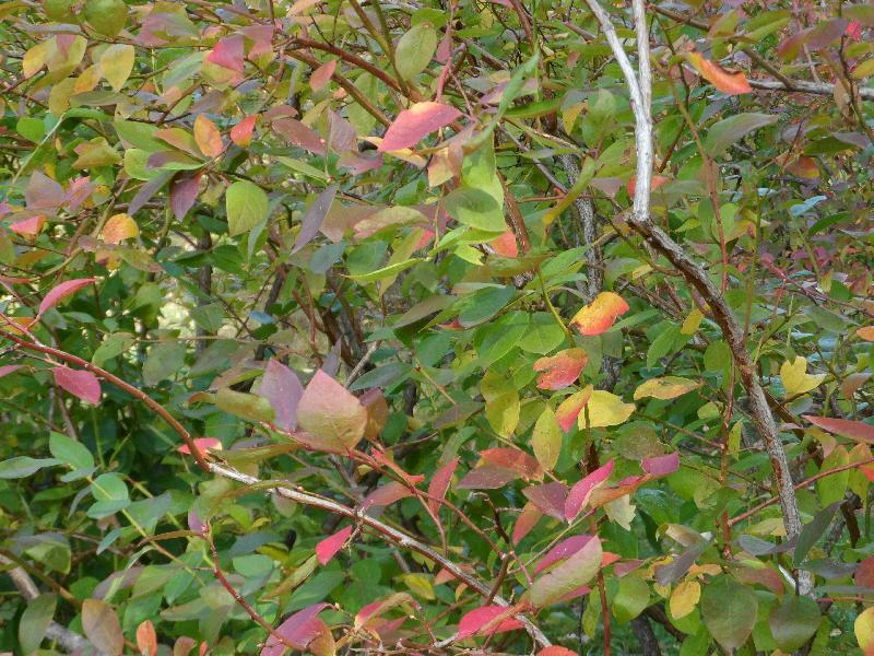 Les feuilles les unes après les autres changent de couleurs